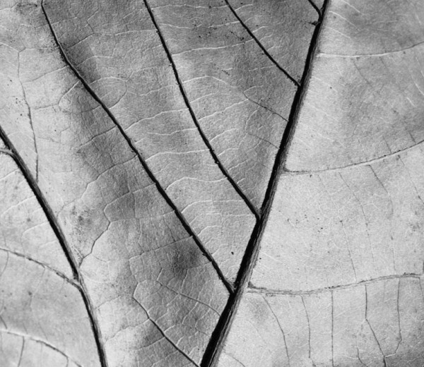 PHOTOGRAPHY LEAF LIFE WAY – 2013